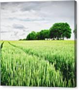 Summer Grains Canvas Print