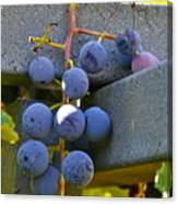 Summer Grapes Canvas Print