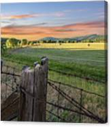 Summer Hay Bales  Canvas Print