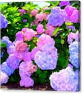 Summer Hydrangeas #2 Canvas Print