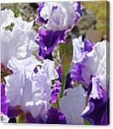 Summer Iris Garden Art Print White Purple Irises Flowers Baslee Troutman Canvas Print
