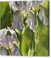 Summer Irises Canvas Print
