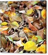 Summer Leaves For Fall Canvas Print