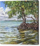 Summer Mangrove Melody Canvas Print