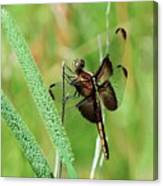 Summer Dragonfly Canvas Print
