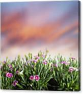 Summer Meadow Flowers In Grass At Sunset. Canvas Print