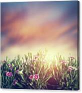 Summer Meadow Flowers In Grass At Sunset. Vintage Canvas Print