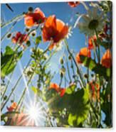 Summer Meadow Canvas Print