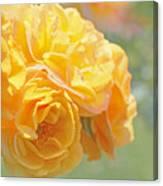 Golden Yellow Roses In The Garden Canvas Print