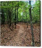 Summer Path At Shiloh Canvas Print