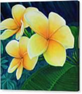 Summer Plumeria Canvas Print