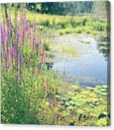 Summer Pond In The Berkshires Canvas Print