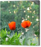 Summer Poppies Canvas Print