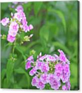 Summer Purple Flower Canvas Print