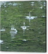 Summer Rain Canvas Print