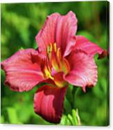 Summer Red Lily Canvas Print