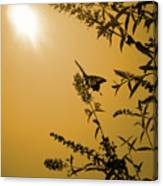 Summer Silhouette Canvas Print
