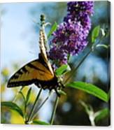 Summer Swallowtail Canvas Print