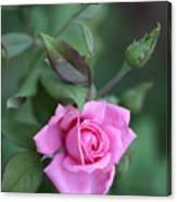 Summer Sweet Rose Canvas Print