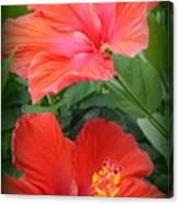 Summer Time Beauties - Hibiscus - Dora Sofia Caputo Canvas Print