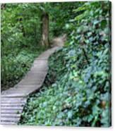 Summer Trail Path Canvas Print