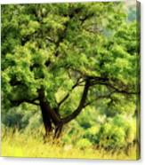 Summer Tree Canvas Print