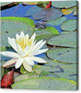 Summer Water Lily Canvas Print