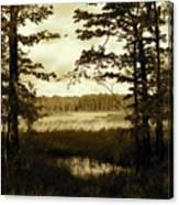 Summer Wetlands Canvas Print