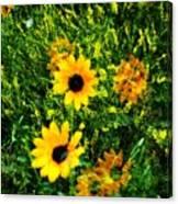 Summer Wildflower Dreams Canvas Print