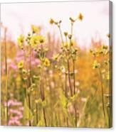 Summer Wildflower Field Of Sunflowers Canvas Print