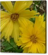 Summer Yellow Coreopsis Canvas Print