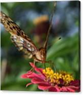 Summer's Sweet Nectar Canvas Print
