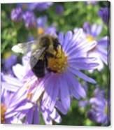 Summertime Bee Canvas Print