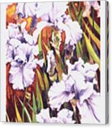 Summertime Irises Canvas Print