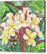 Summertime Kauai Island Plumeria Watercolor By Jenny Floravita Canvas Print