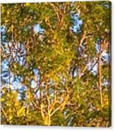 Summertime Tree Canvas Print