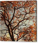Summing Nature Call  Canvas Print