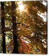 Sun And Autumn Canvas Print