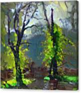 Sun Ater Rain Canvas Print