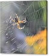 Spider On Web Canvas Print