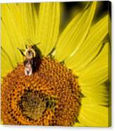 Sun Bee Canvas Print