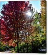 Sun Burst In Autumn Canvas Print