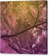 Sun Filter Canvas Print