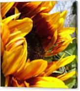 Sun Fire Flower Canvas Print