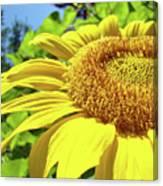 Sun Flower Art Sunlit Sunflower Giclee Prints Baslee Troutman Canvas Print