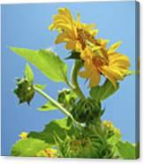 Sun Flower Artwork Sunflower 5 Giclee Art Prints Baslee Troutman Canvas Print