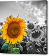 Sun Flower B And W Canvas Print