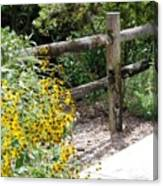 Sun Flower Fence Canvas Print