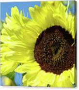 Sun Flower Garden Art Prints Sunflowers Baslee Troutman Canvas Print