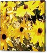 Sun Flower Glory Canvas Print